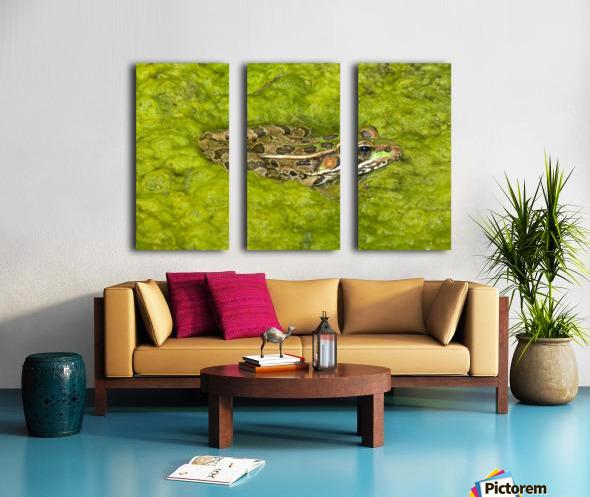 A Rio Grande Leopard Frog Sitting On A Bed Of Algae Split Canvas print