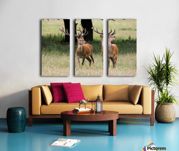 Elk In The Wild Split Canvas print