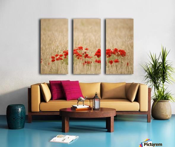 Poppies Growing Wild Split Canvas print