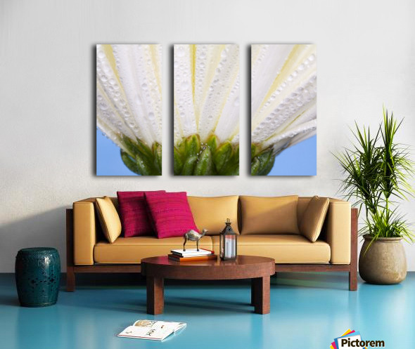 White Flower Head With Dew Split Canvas print