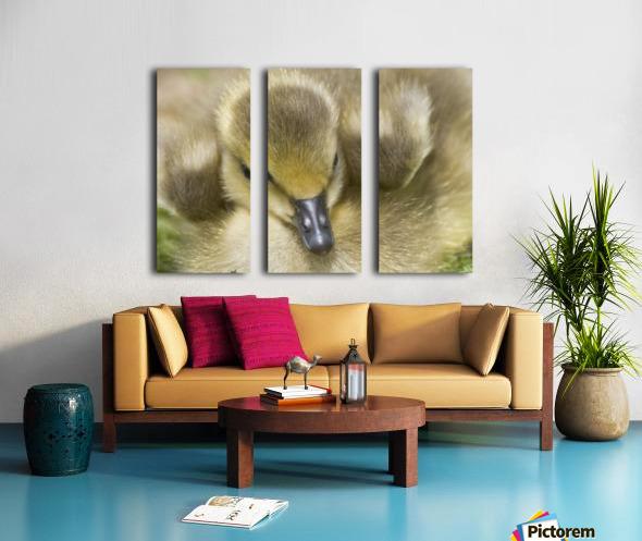 Fuzzy Gosling Split Canvas print