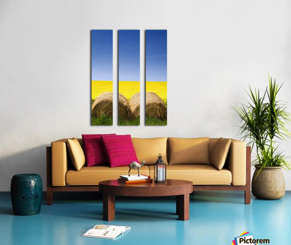 Hay Bales And Canola Field, North Yorkshire, England Split Canvas print
