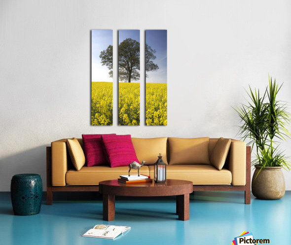 Tree In A Rapeseed Field, Yorkshire, England Split Canvas print