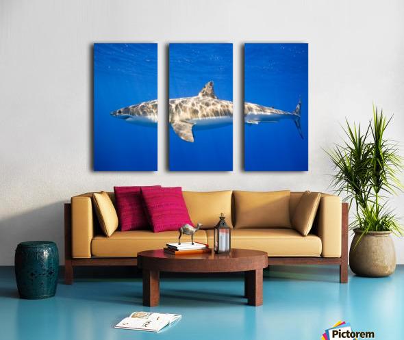 Great White Shark (Carcharodon Carcharias) Split Canvas print