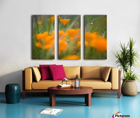 Close Up Of Orange Poppy Flowers Split Canvas print