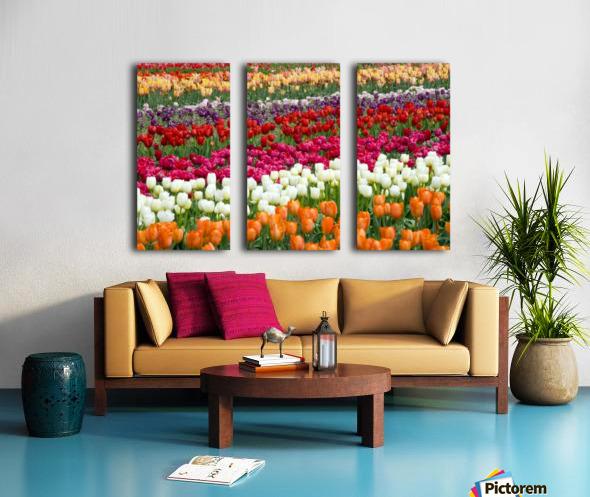A Tulip Field Split Canvas print