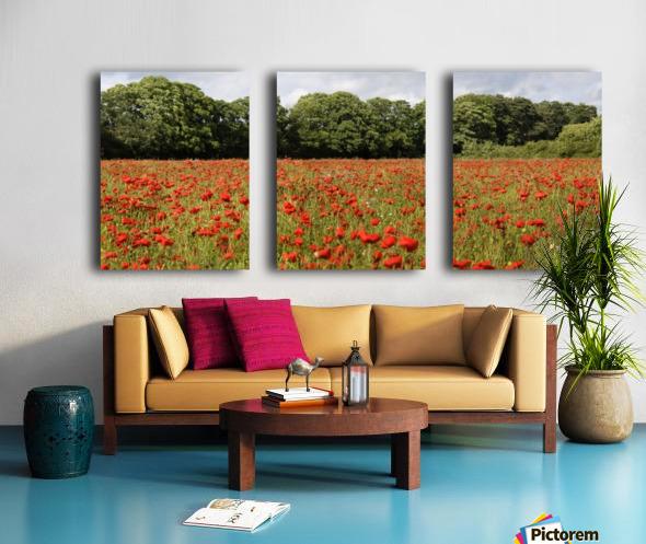 Poppy Field Split Canvas print