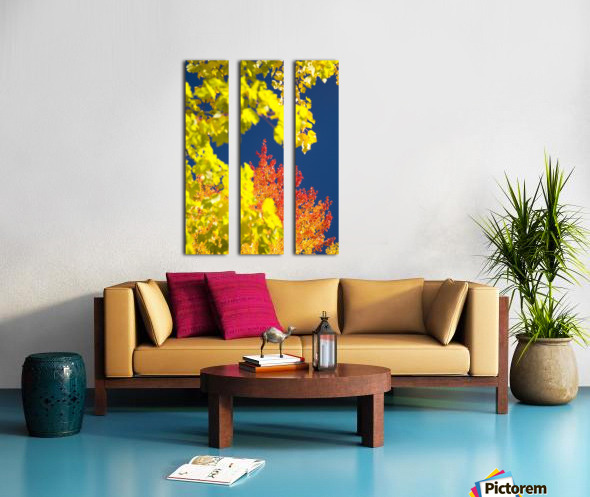 Autumn Trees Split Canvas print