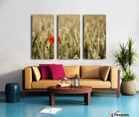 Poppy Flower In Field Of Wheat Split Canvas print