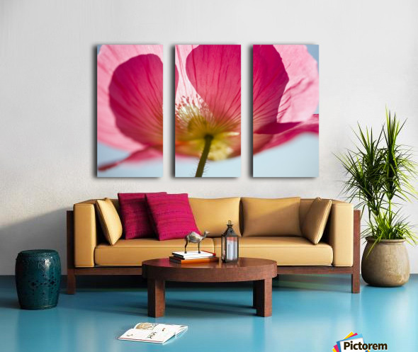 Pink Shirley Poppy Split Canvas print