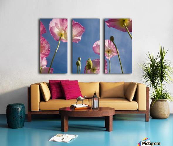 Shirley Poppies Split Canvas print