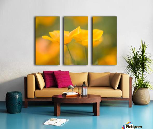 Yellow Poppy Flower, Mount Hood, Oregon, Usa Split Canvas print
