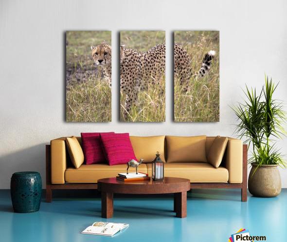 Cheetah (Acinonyx Jubatus), Masai Mara National Reserve, Kenya, Africa; Cheetah On The Prowl Split Canvas print