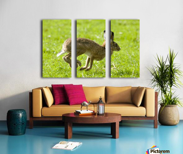 Hare Hopping In The Grass Split Canvas print