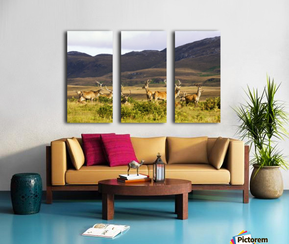 Island Of Islay, Scotland; Male Deer Roaming The Hills Split Canvas print
