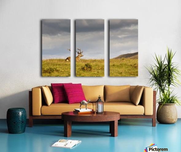 Island Of Islay, Scotland; Buck Resting On A Hill Split Canvas print