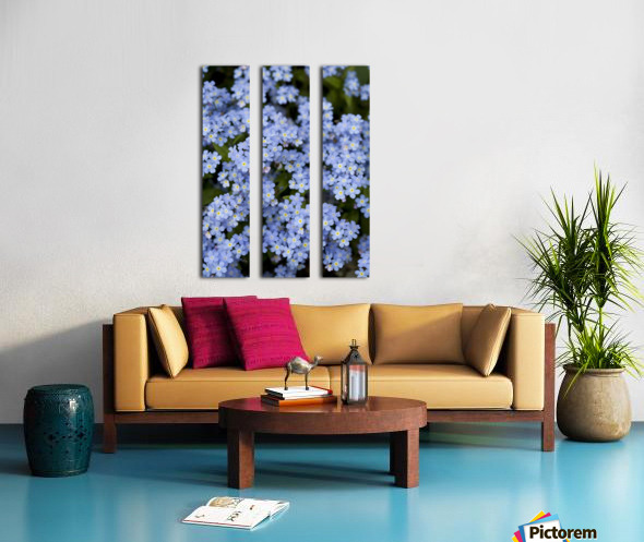Victoria, British Columbia, Canada; Blooming Blue Flowers Split Canvas print