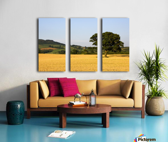Tree In A Golden Field Of Grain, North Yorkshire, England Split Canvas print