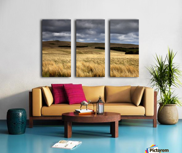 Field Of Wheat With Dark Clouds Overhead, Northumberland, England Split Canvas print