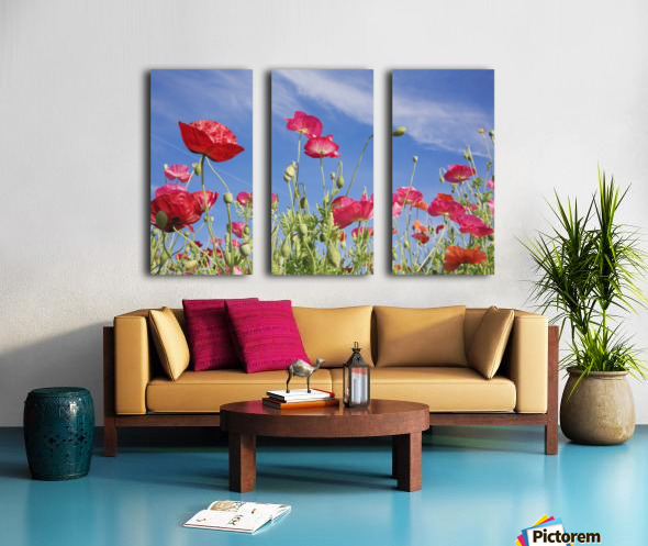 Red Flowers Against Blue Sky Split Canvas print