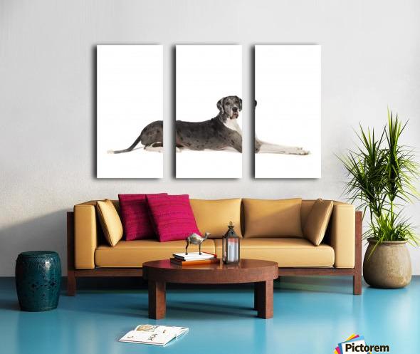 Great Dane Dog Split Canvas print