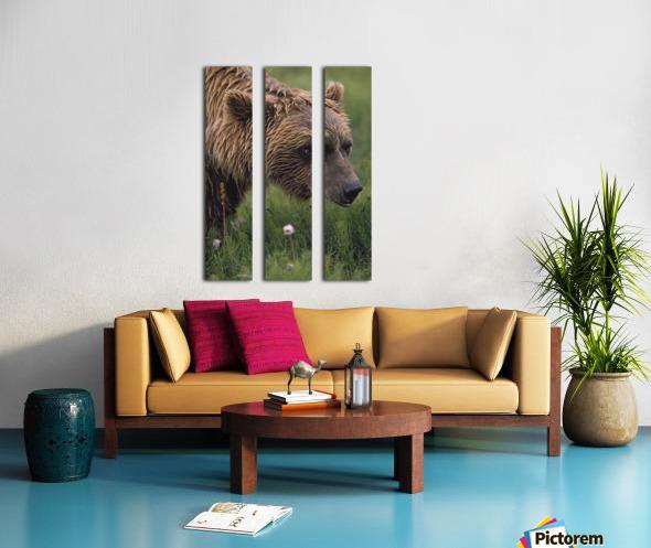 Grizzly Bear Wet From Rain Split Canvas print