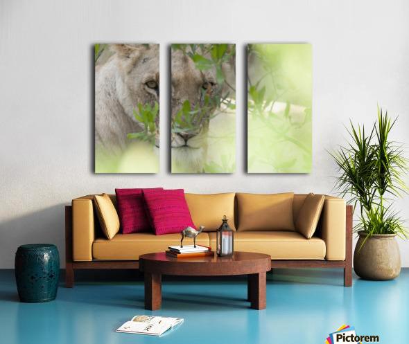 Lioness, Kenya, Africa Split Canvas print