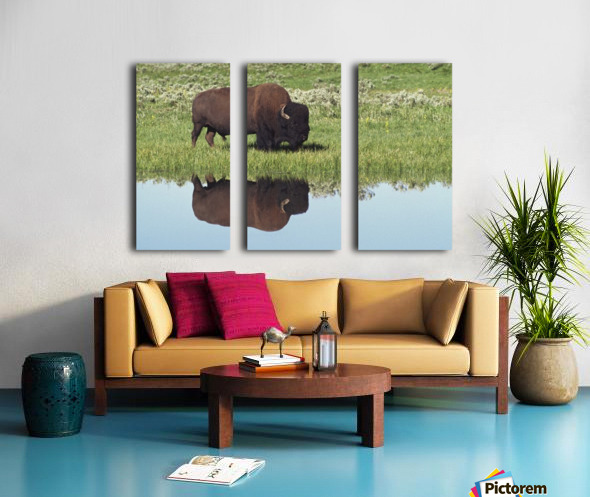 Bison (Bison Bison) On Grassy Meadow With Reflection In Pool Split Canvas print