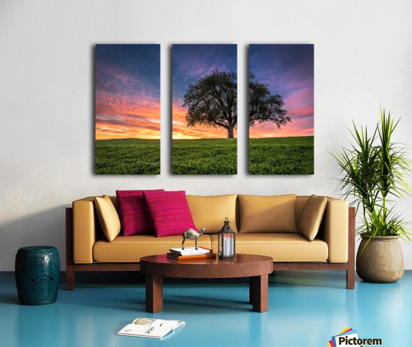 Lonely Tree at Sunset Split Canvas print