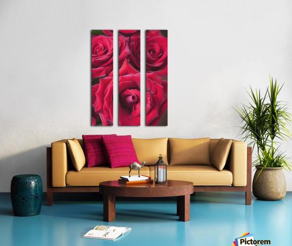 Red Roses; Quebec, Canada Split Canvas print