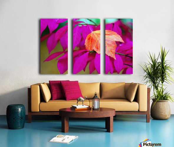 Oregon, United States Of America; A Red Leaf Laying On Bright Pink Leaves Split Canvas print