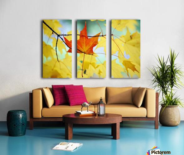 Oregon, United States Of America; An Orange Leaf Fallen On Yellow Leaves Split Canvas print