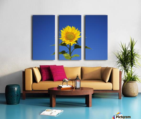Laval, Quebec, Canada; Sunflower (Helianthus Annuus) Against A Blue Sky Split Canvas print