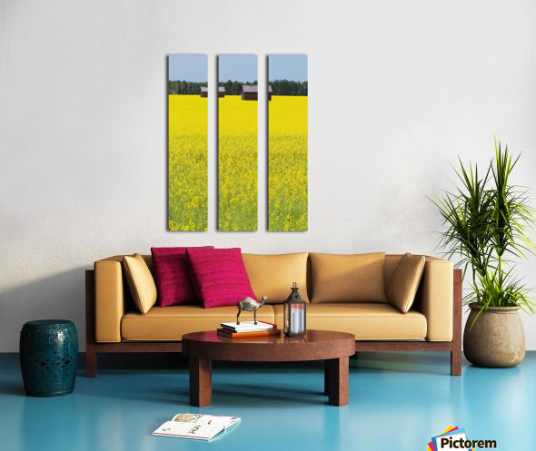Alberta, Canada; Two Wooden Shacks In A Canola Field Split Canvas print