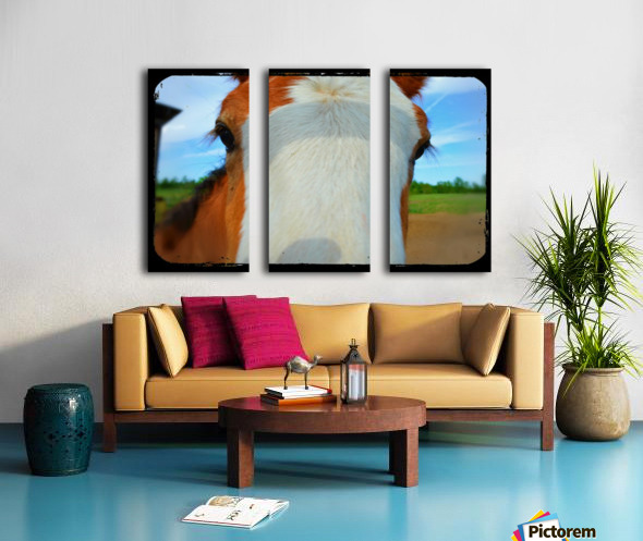 Baby Clydesdale Split Canvas print