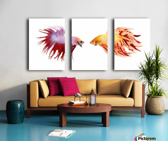 Two Colorful Fish With Long Fins Split Canvas print