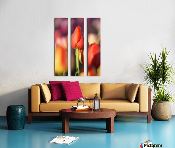 Woodburn, Oregon, United States Of America; Close Up Of A Closed Tulip Split Canvas print
