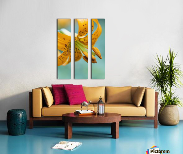 Oregon, United States Of America; A Lily On Mount Hood Split Canvas print