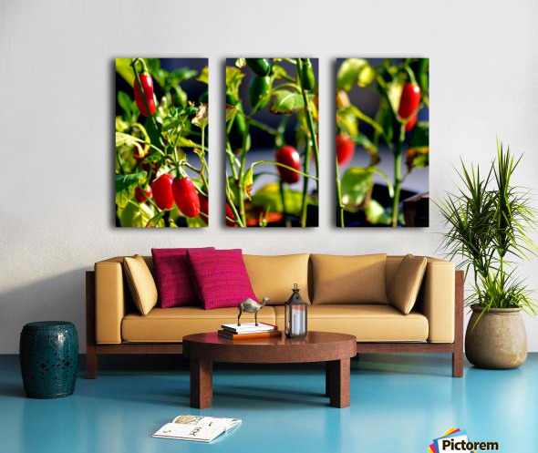 Peppers Split Canvas print
