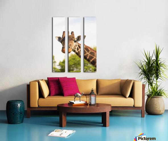 Buenos Aires, Argentina; Giraffe (Giraffa Camelopardalis) In Palermo Zoological Gardens Split Canvas print