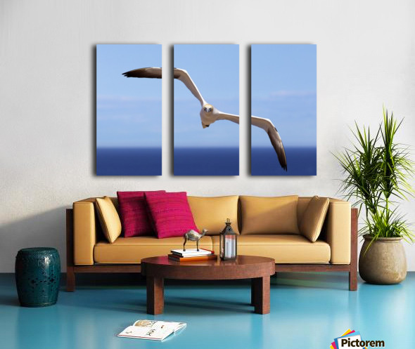 Gannet Flying Over The Water; Perce, Quebec, Canada Split Canvas print
