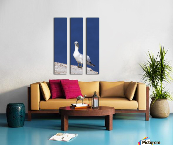 Gannet With An Attitude Staring At The Camera; Perce, Quebec, Canada Split Canvas print