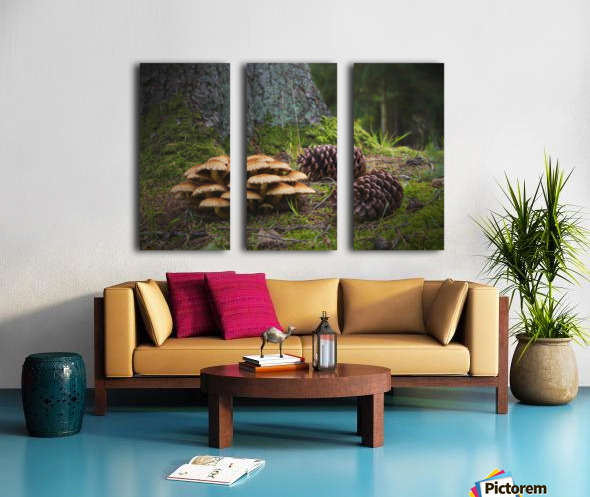Mushrooms And Pine Cones On The Forest Floor; Northumberland, England Split Canvas print