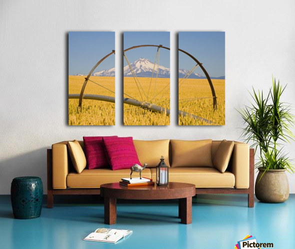Irrigation Pipe In Wheat Field With Mount Hood In Background; Oregon, Usa Split Canvas print