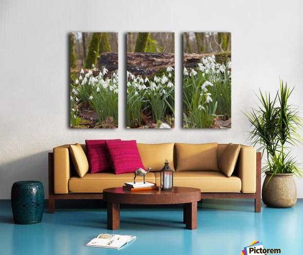 White Flowers Growing On A Forest Floor Beside A Fallen Tree; Dumfries, Scotland Split Canvas print