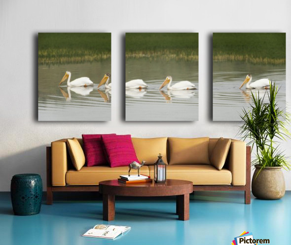 American White Pelicans Swim In A Line On The Yellowstone River; Wyoming, Usa Split Canvas print
