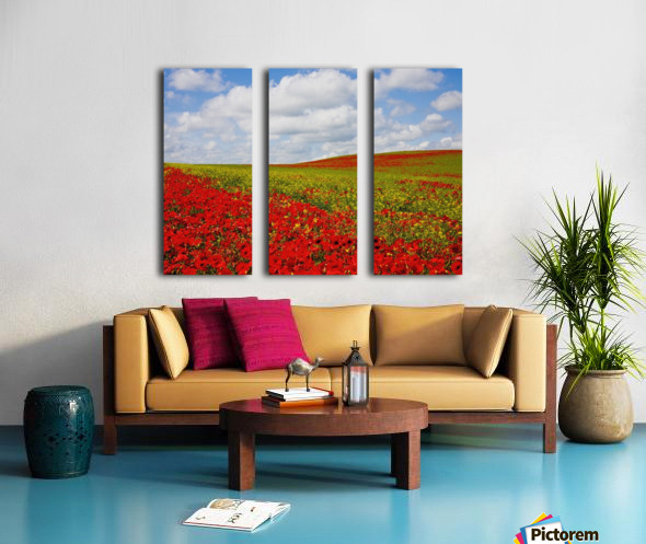 An Abundance Of Red Poppies In A Field; Corbridge, Northumberland, England Split Canvas print