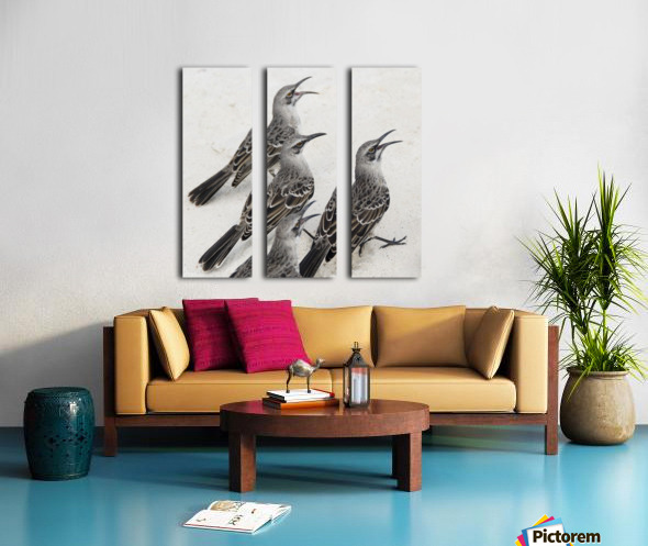 Mockingbirds (Mimidae); Galapagos, Equador Split Canvas print