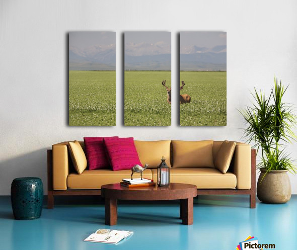Male Deer With Antlers In A Flowering Pea Field With Mountains And Foothills In The Background; Alberta, Canada Split Canvas print