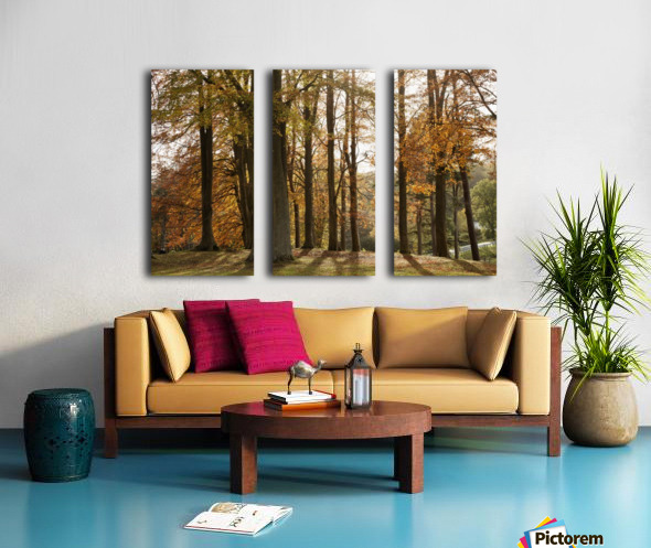 Trees In Autumn Colours Casting A Shadow On The Ground; Northumberland, England Split Canvas print